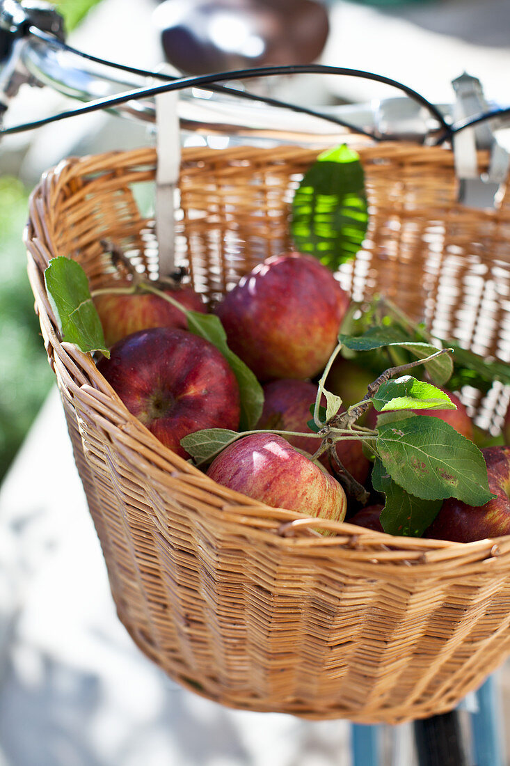 Bicycle basket with fresh apples