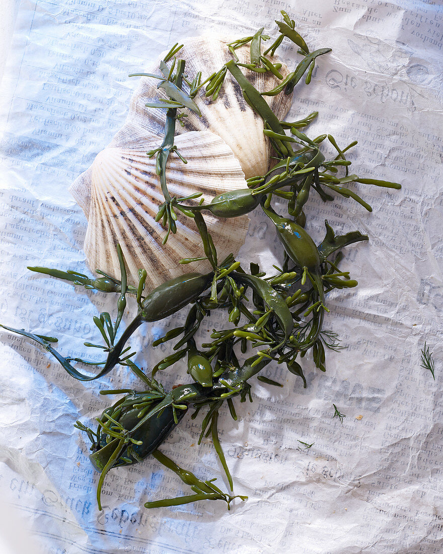 Algae and mussels on a sheet of paper