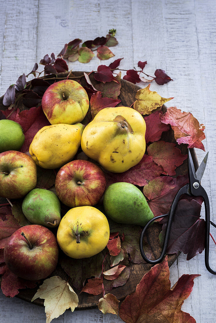 Autumnal fruit (quince, apples, pears) with leaves and scissors on a wooden board