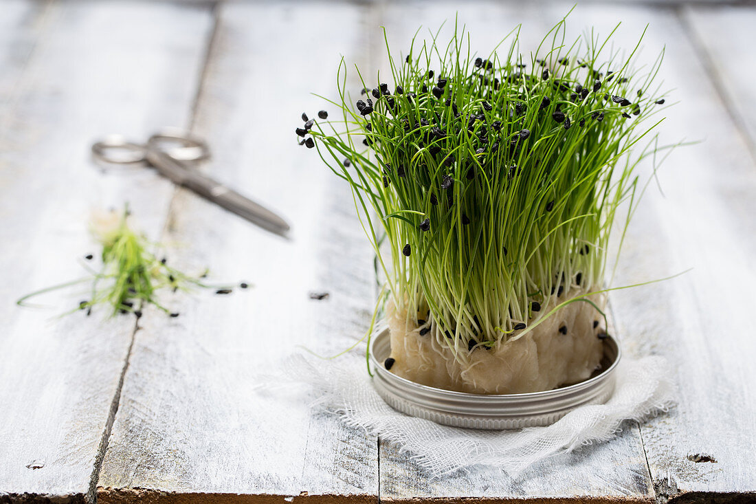 Sprouting cress