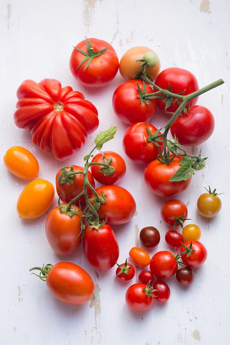 Eiertomaten, Fleischtomaten, Kirschtomaten und Strauchtomaten