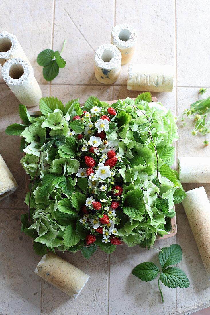 Rectangular arrangement of strawberry plants