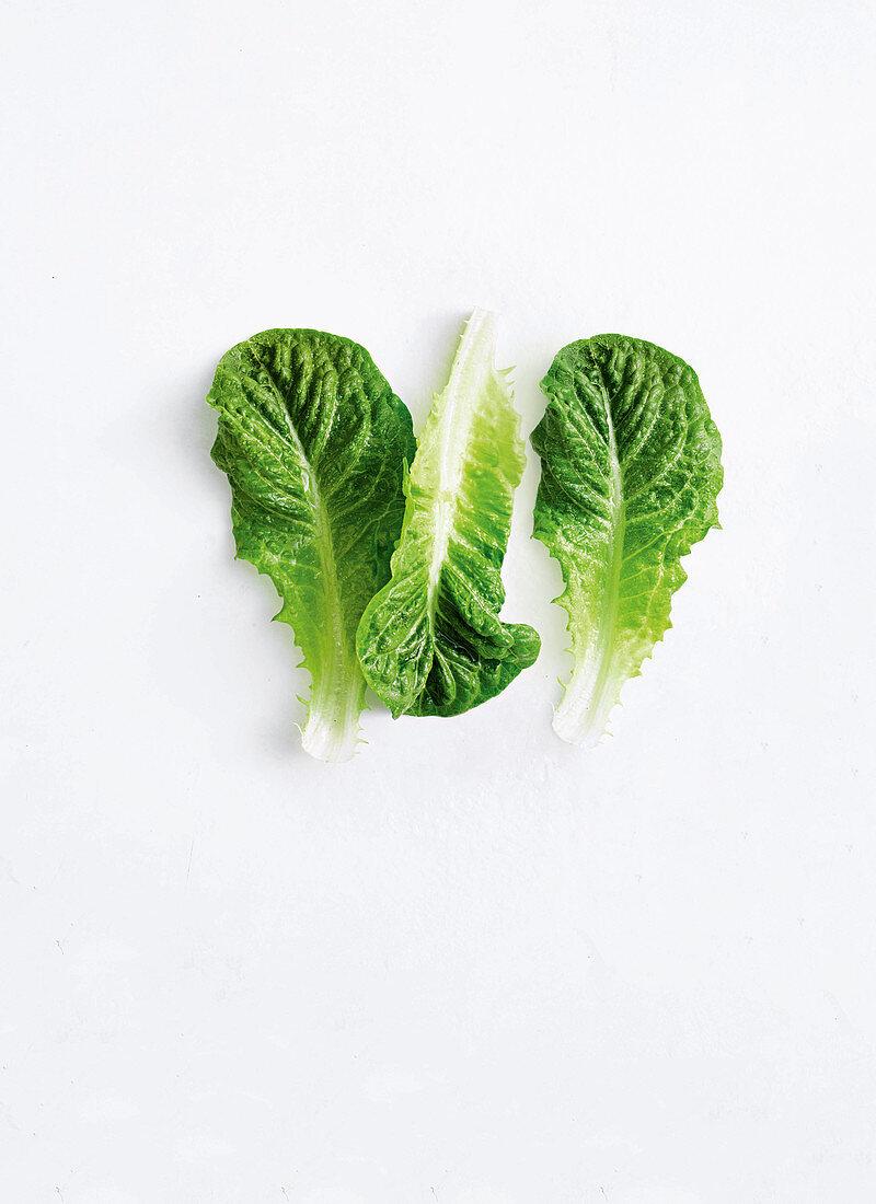 Crisp, bright-green lettuce