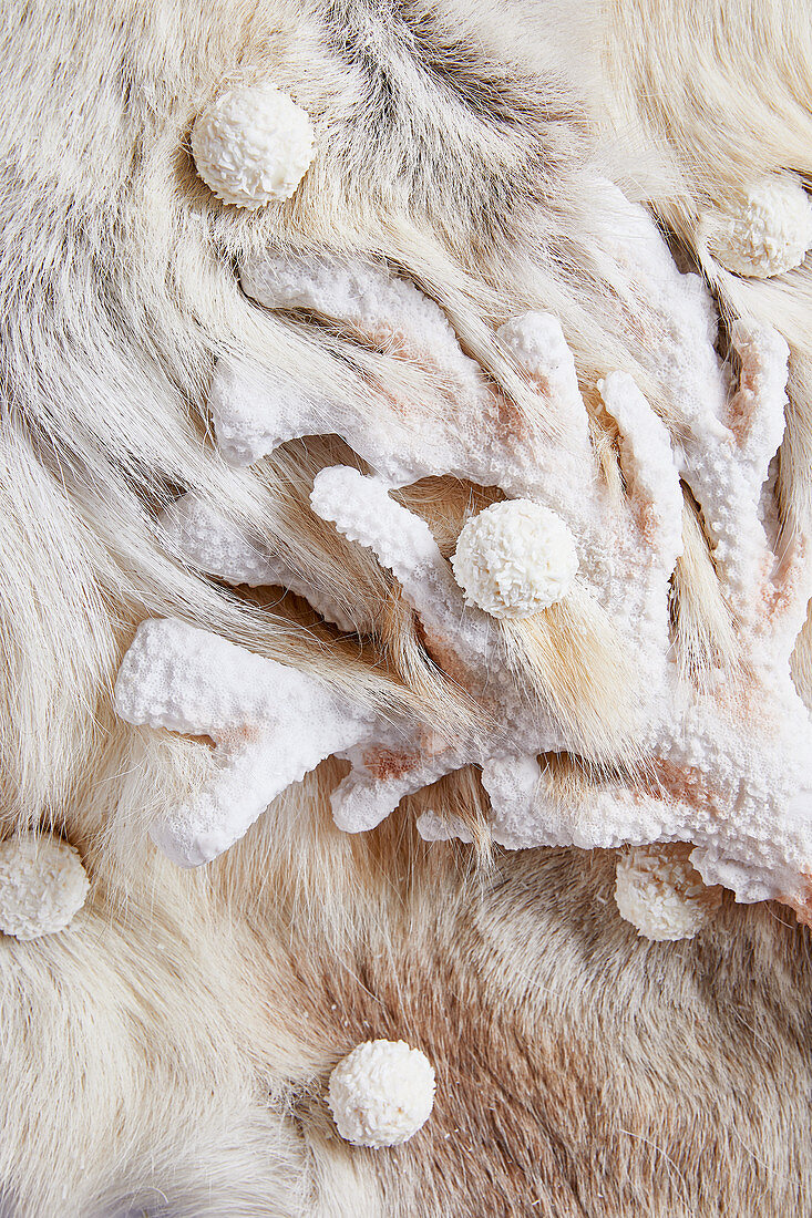 An arrangement of of white shades made from animal fur, corral and truffle pralines (full frame)