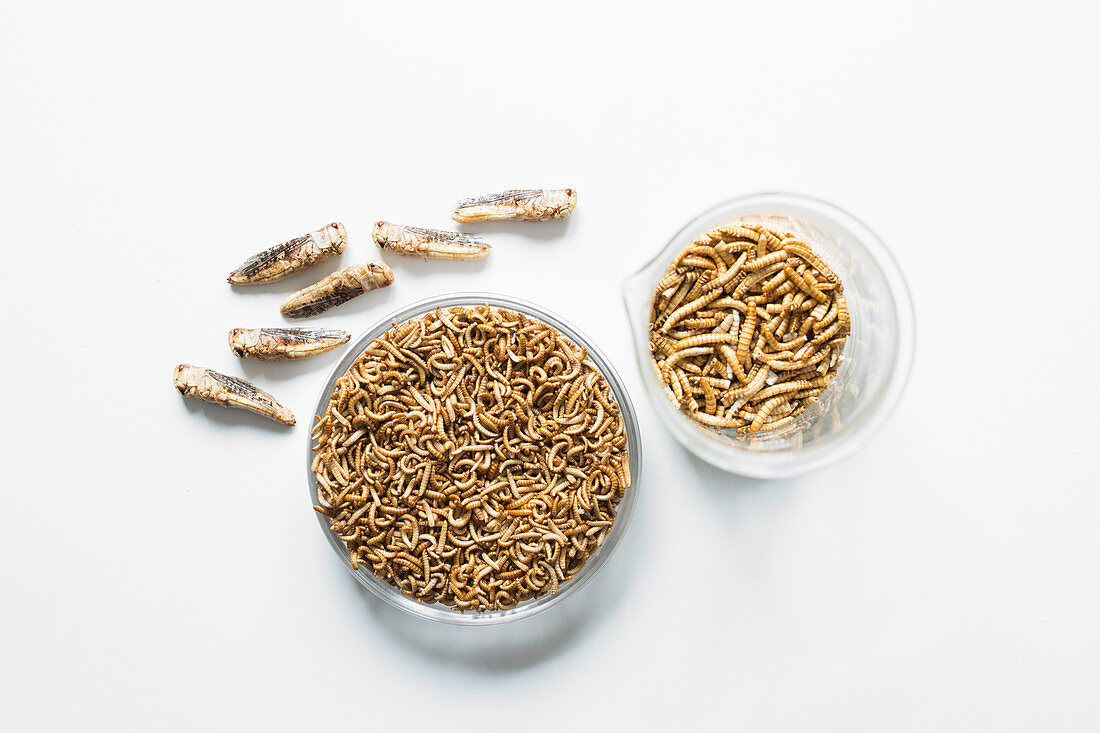 Edible, freeze-dried grasshoppers, mealworms and buffalo worms in glass jars (freeze-dried)
