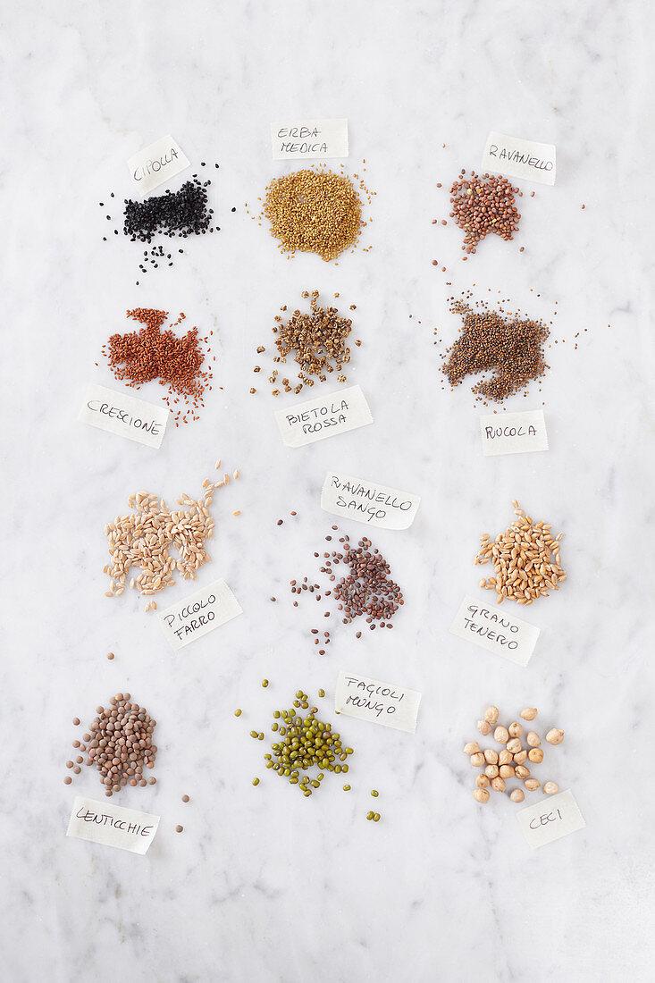 Various seeds for growing seedlings