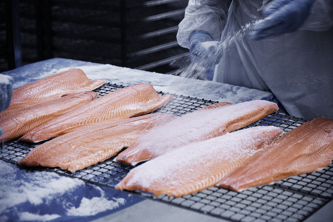 Salmon fillets being salted