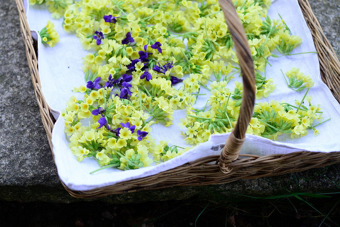 Cowslip on a cork tray