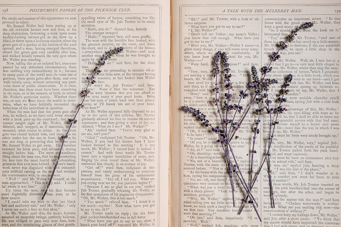 African basil plant lilac blossoms on an open book