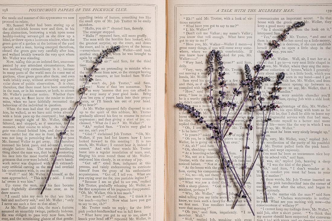 Lila Blüten der afrikanischen Basilikumpflanze auf einem offenen Buch