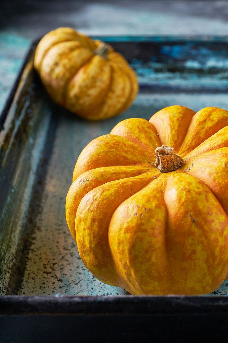 Pumpkins on a blue background