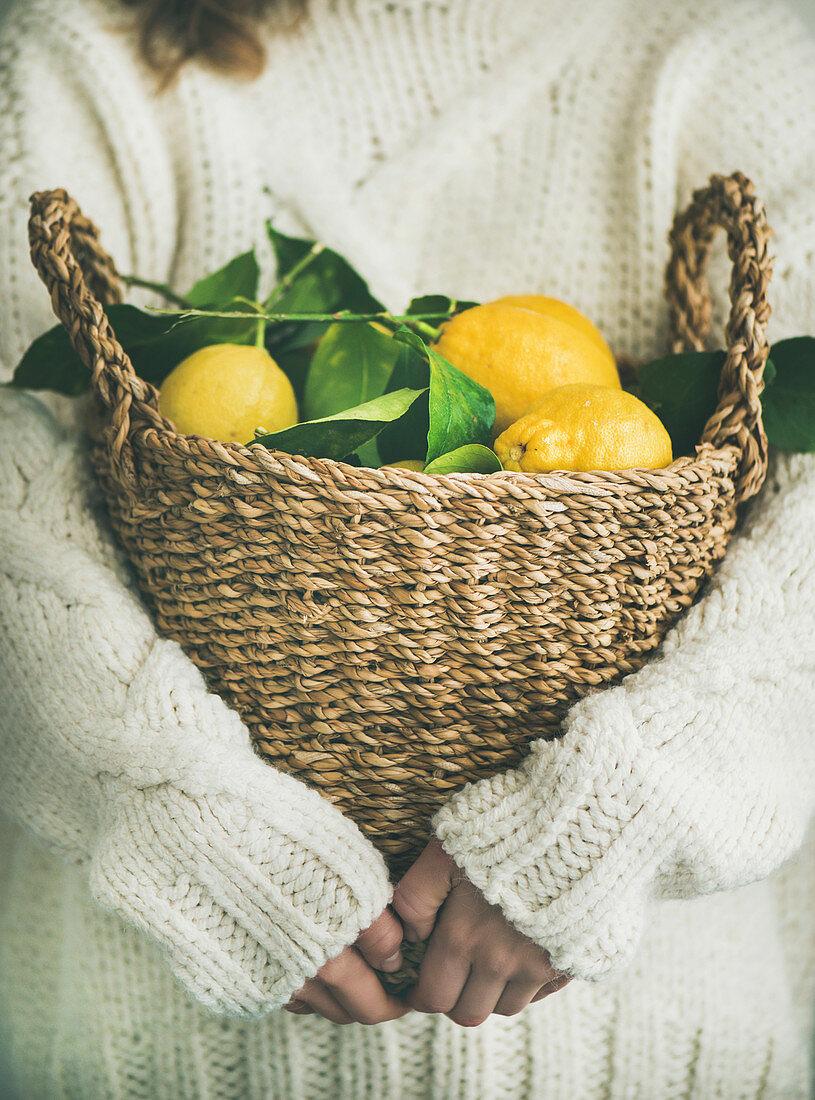 Woman gardener in white woolen sweater holding basket of freshly picked Mediterranean lemons