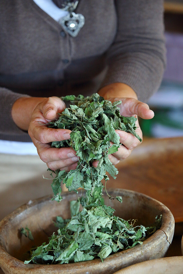 Dried lemon balm leaves falling through woman's hands into bowl
