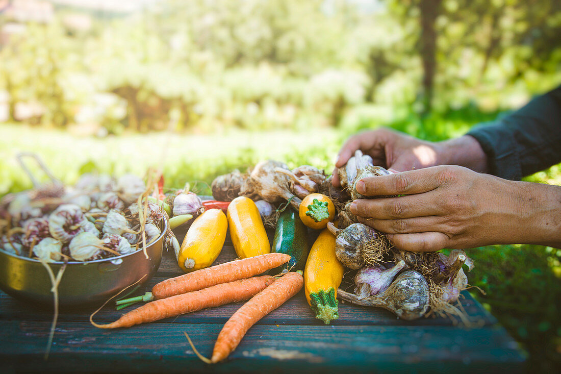 Farmers hands with freshly harvested organic vegetables