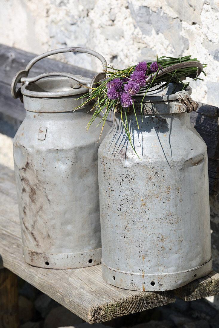 Flowering chives lying on top of milk churn