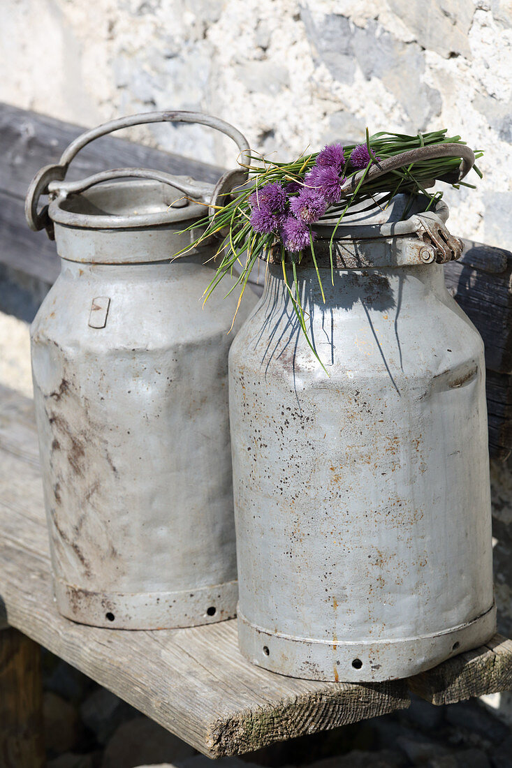 Schnittlauch mit Blüten auf Milchkanne liegend