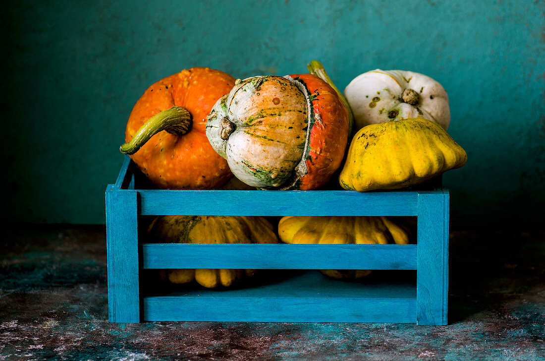 Decorative pumpkins in a blue box