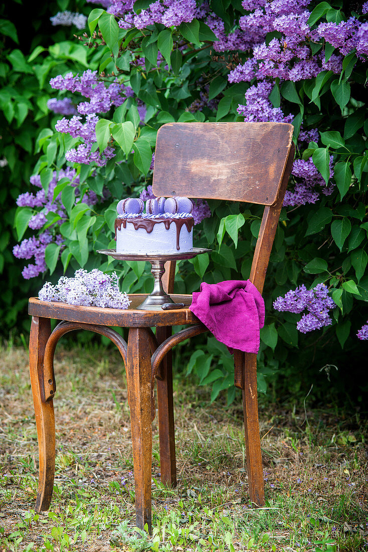 A festive blueberry cake with blue macaroons in front of flowering lilac