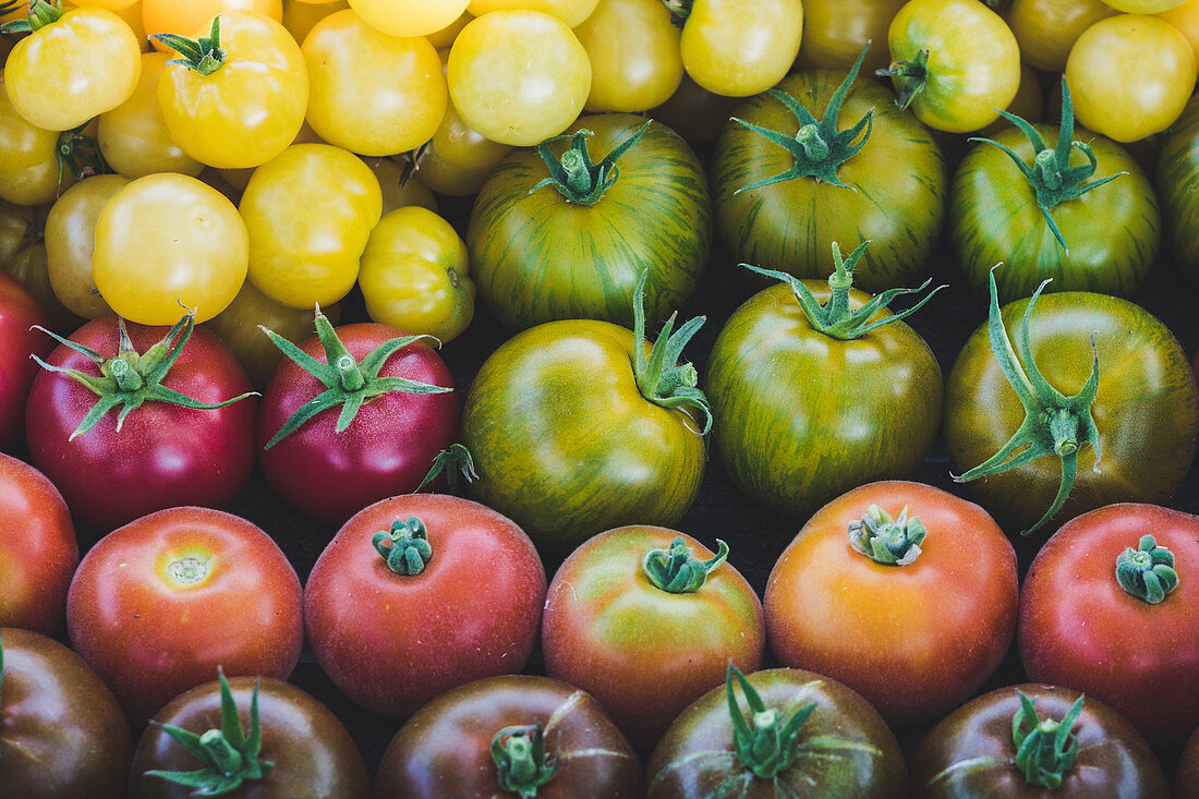 Freshly harvested tomatoes: red peach, green zebra, Silesian raspberry, lemon grape