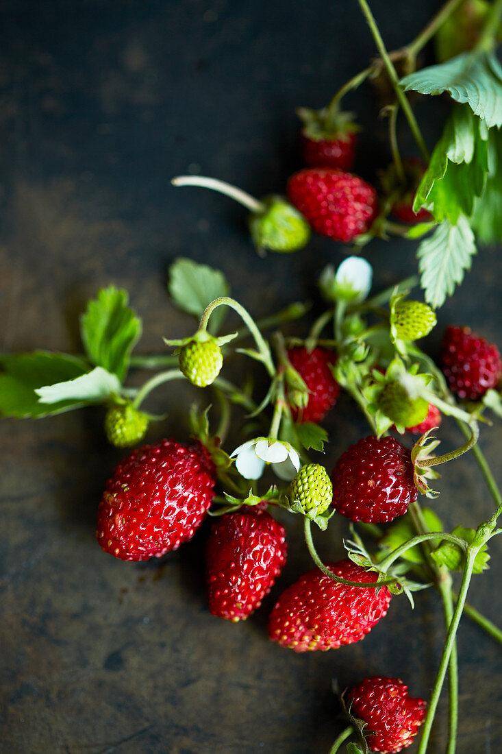 Wild strawberries on a sprig