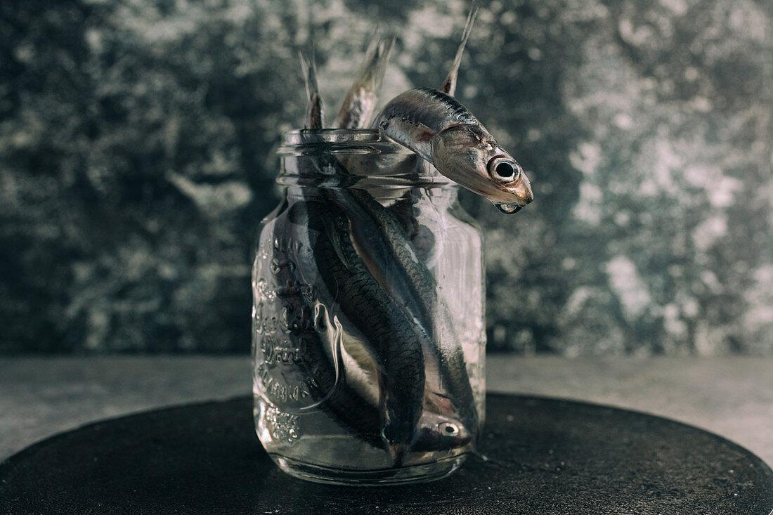 Frische Sardellen im Wasserglas