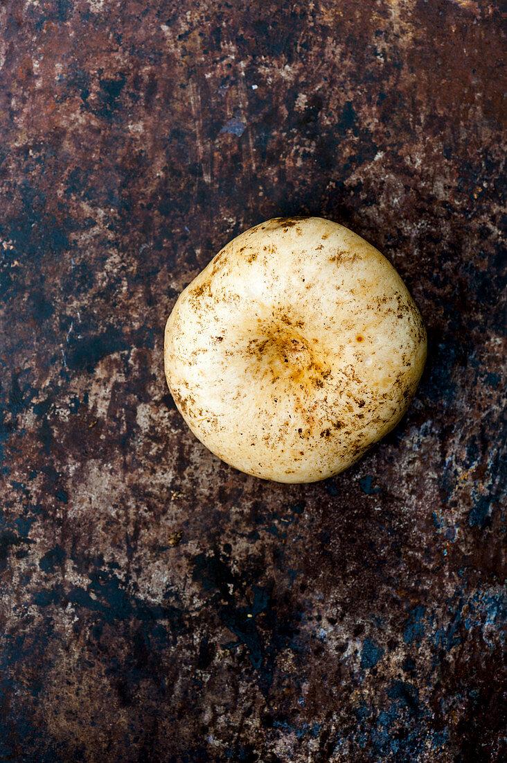 Lactarius piperatus – Blancaccio wild mushroom