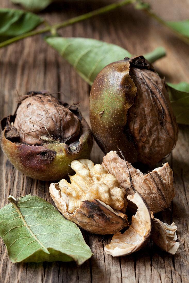 Fresh walnuts with green husks