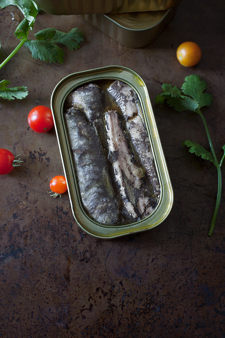 Open Tin of Sardines in Oil on a Metal Background