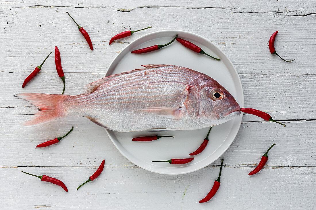 Meerbrasse und rote Chilischoten