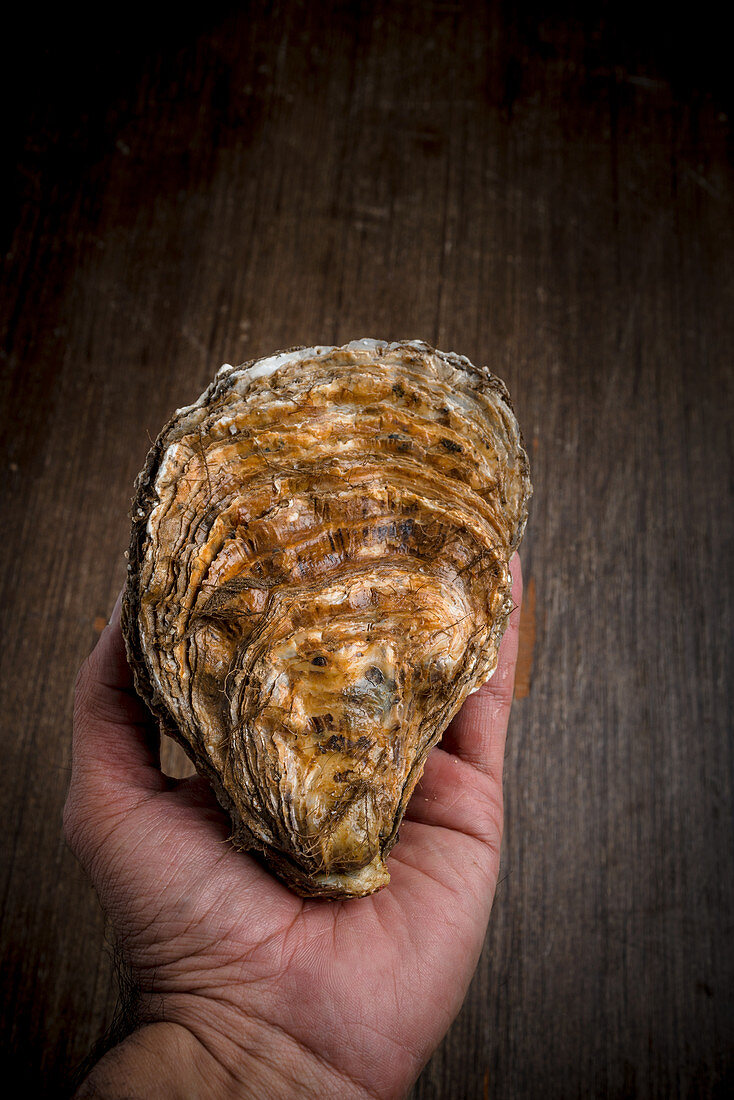 A person holding an oyster