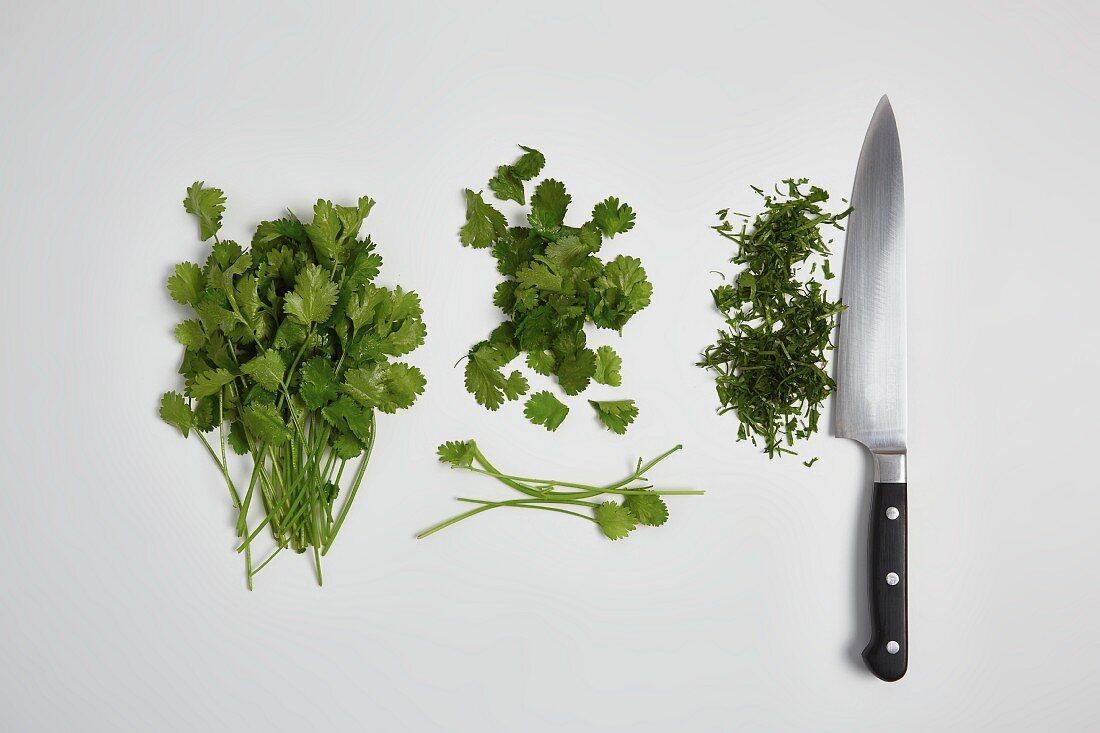 Chopping coriander (step by step)