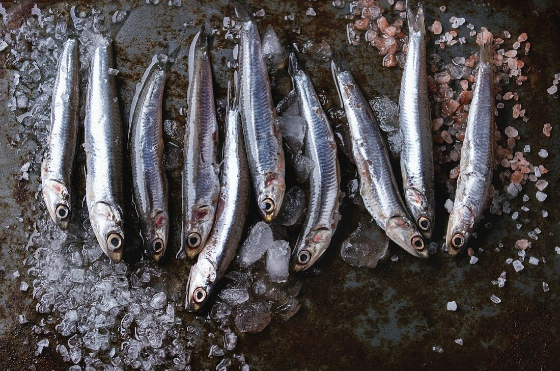 Lot of raw fresh anchovies fishes on crushed ice with pink and sea salt over old dark metal background