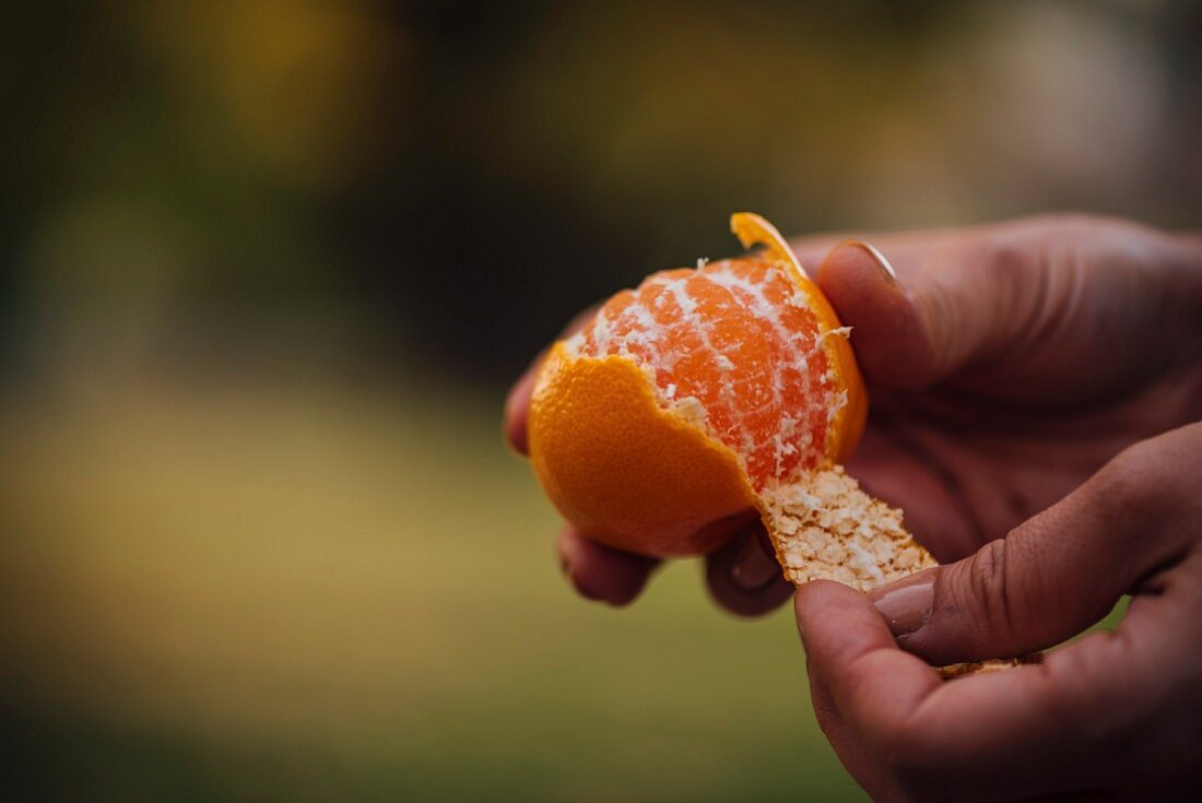 Hands peeling orange in a field