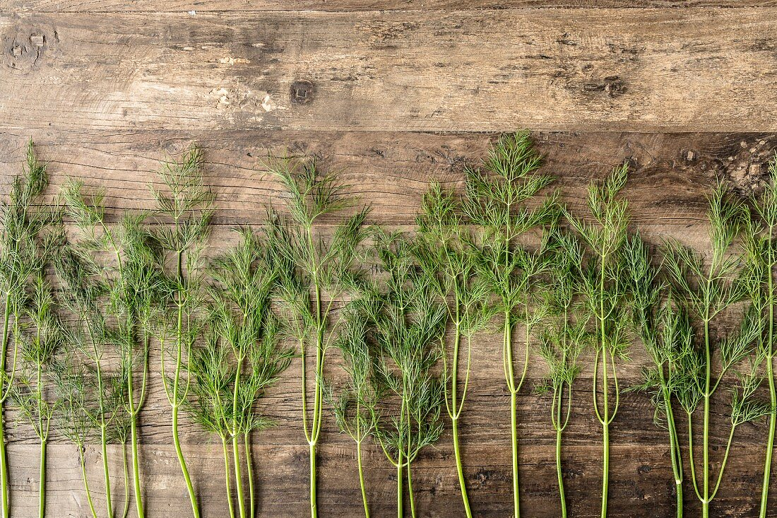 Row of dill stems on a brown wooden surface