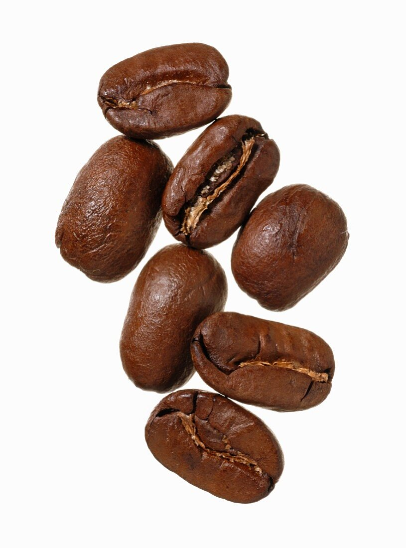 Maragogype Arabica coffee beans, Guatemala