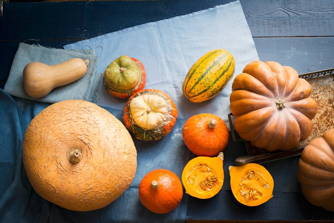Various different pumpkins on blue fabric