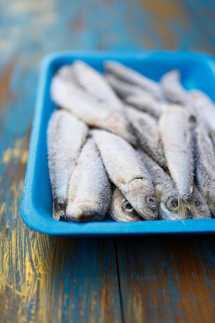 Frozen sardines in a blue styrofoam dish