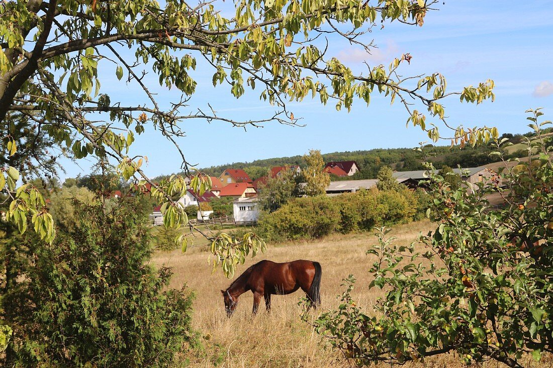 A horse in a paddock along the Luther Trail, Thuringia, Germany