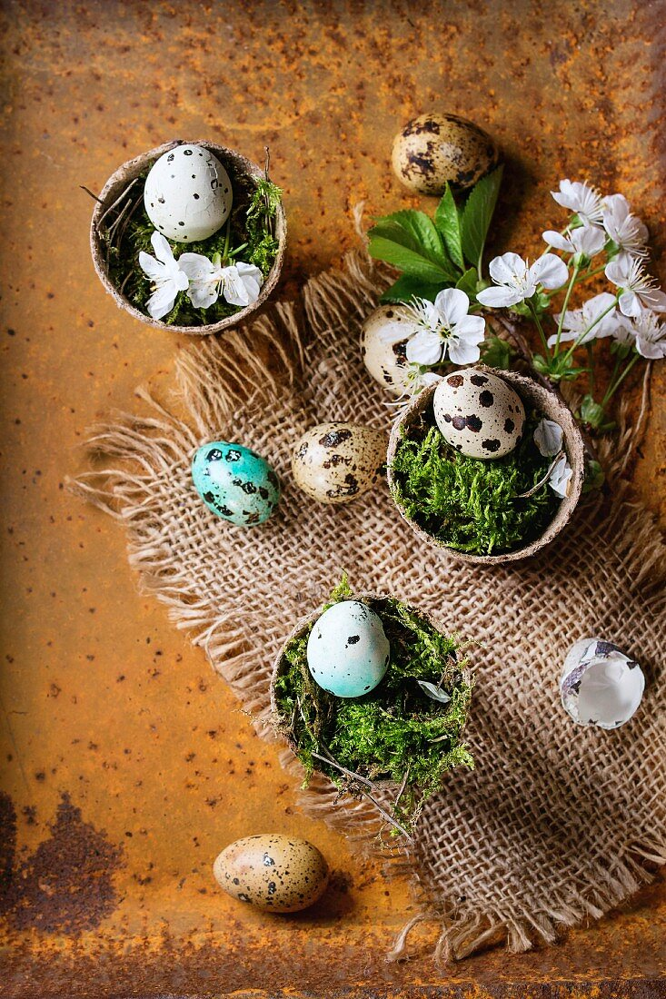 Decor colorful Easter quail eggs with spring cherry flowers and moss in small garden pots on sackcloth