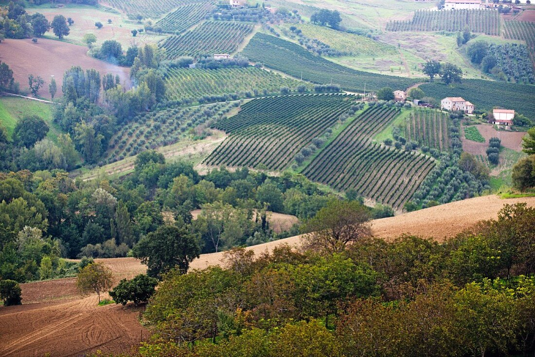 A view of the hills and vineyards of the Tenuta Musone