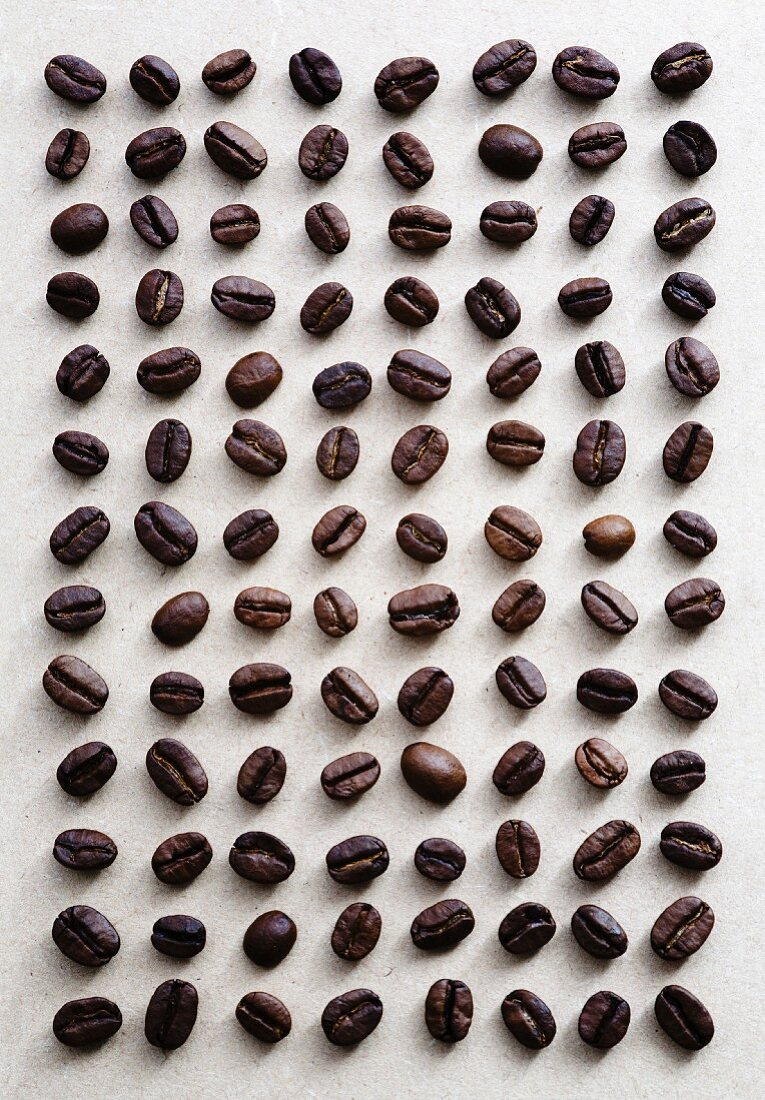 Coffee beans laid out in a grid