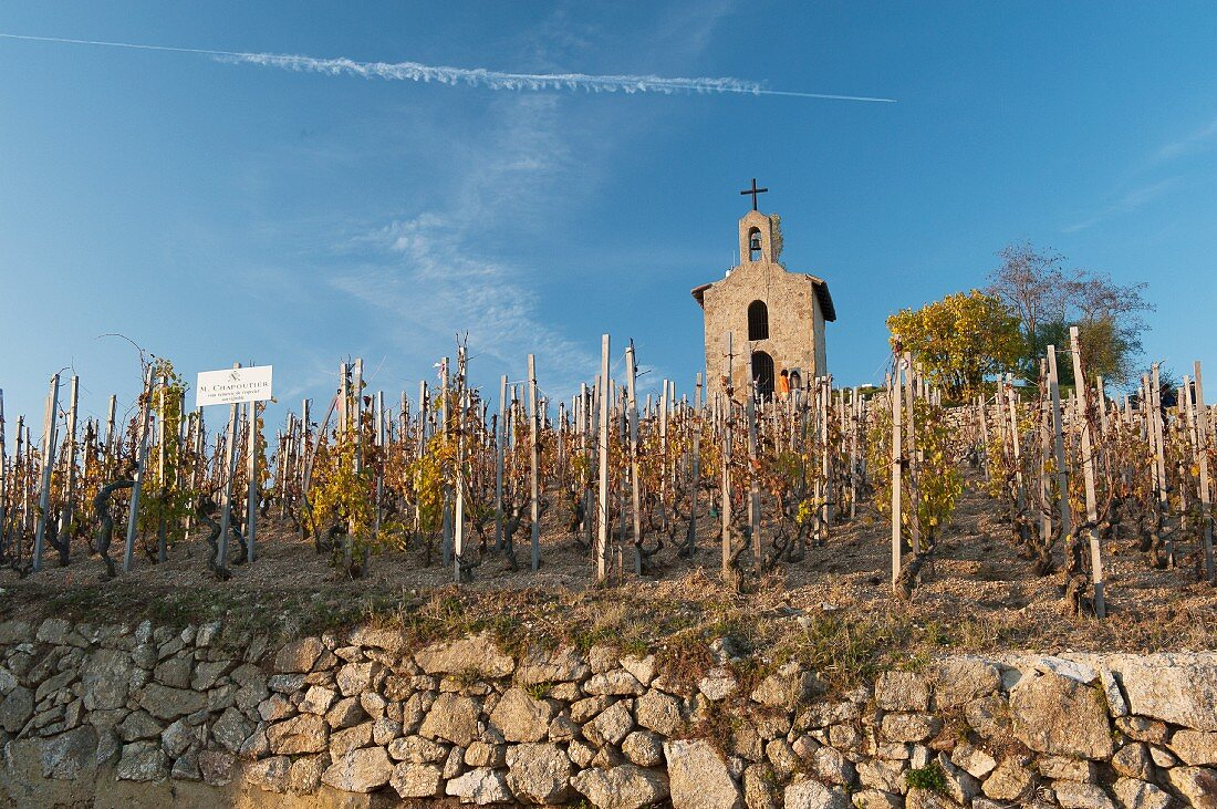 Late autumn in the famous vineyard on the Rhône river