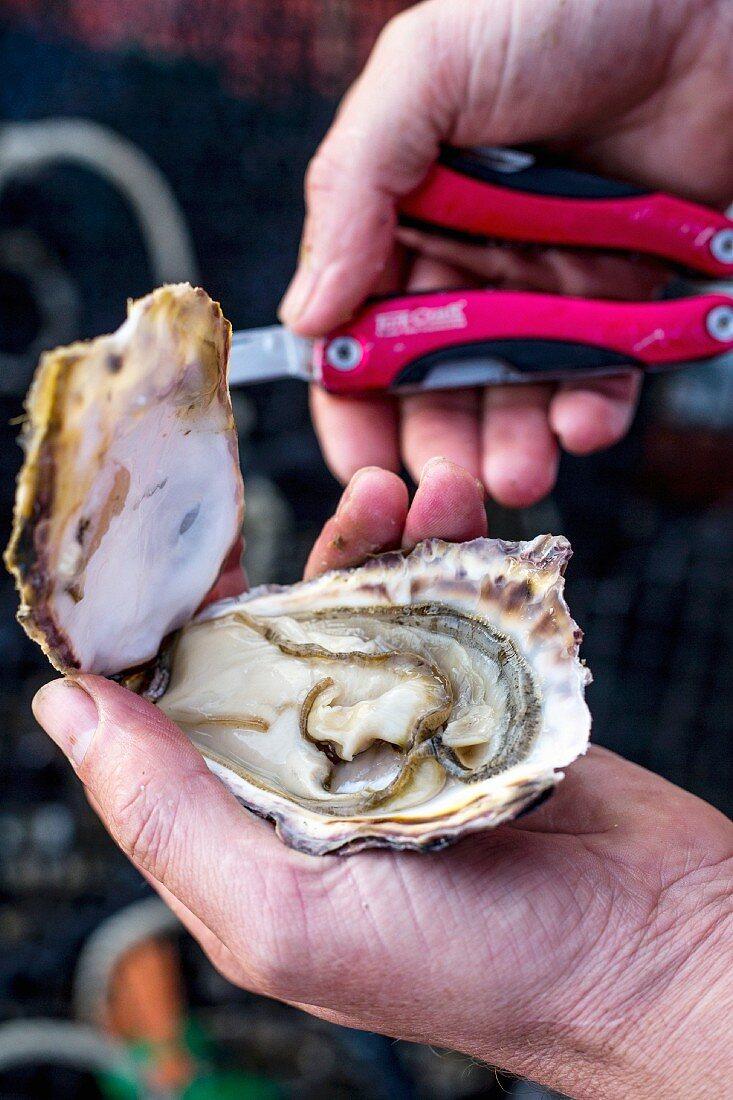 A hand holding an open oyster