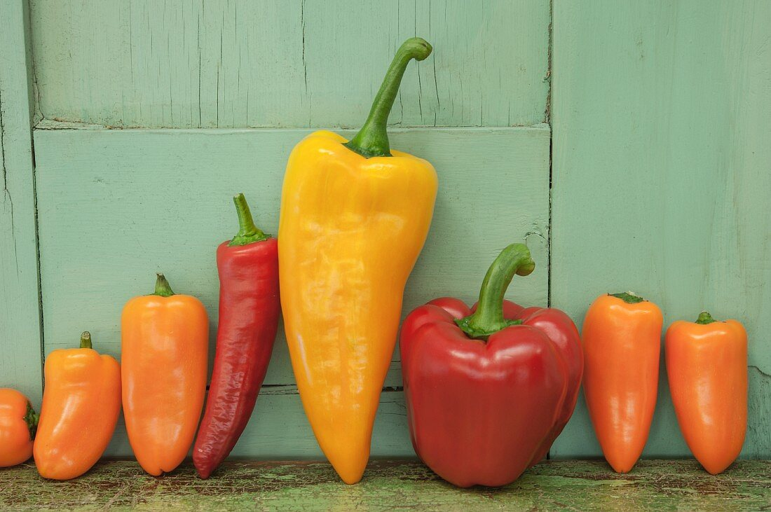 A graphic still life arrangement of a row of colourful red, yellow and orange bell peppers against a green wooden wall