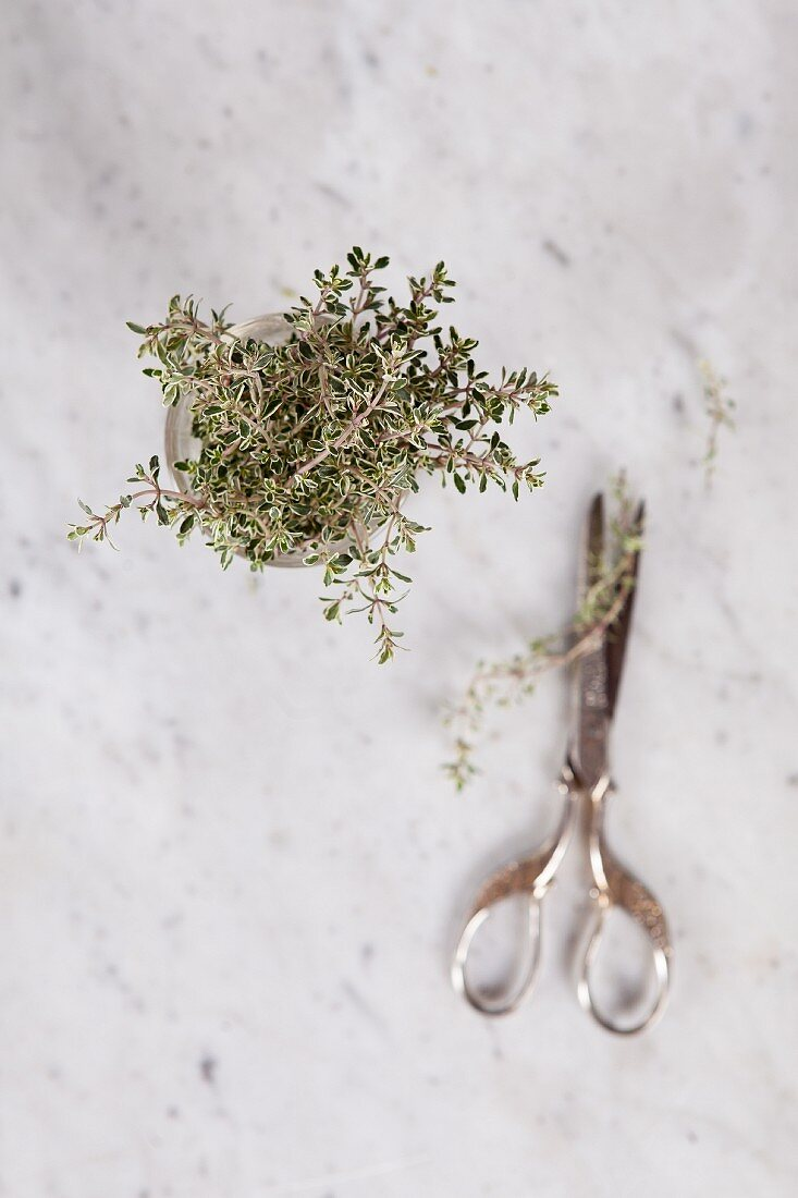 Fresh thyme in a glass jar (top view)
