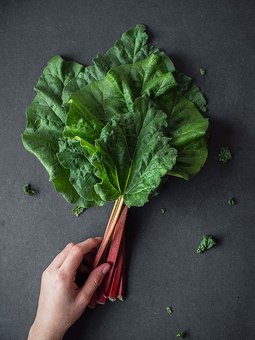 A hand reaching for fresh rhubarb stems with leaves (seen from above)