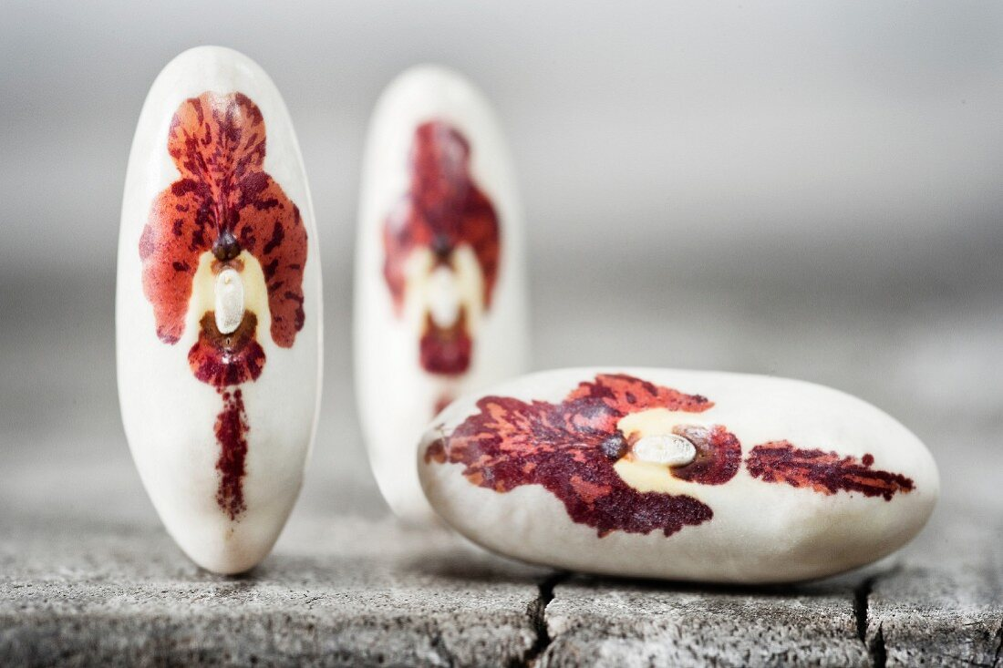 Monstrance beans (close-up)