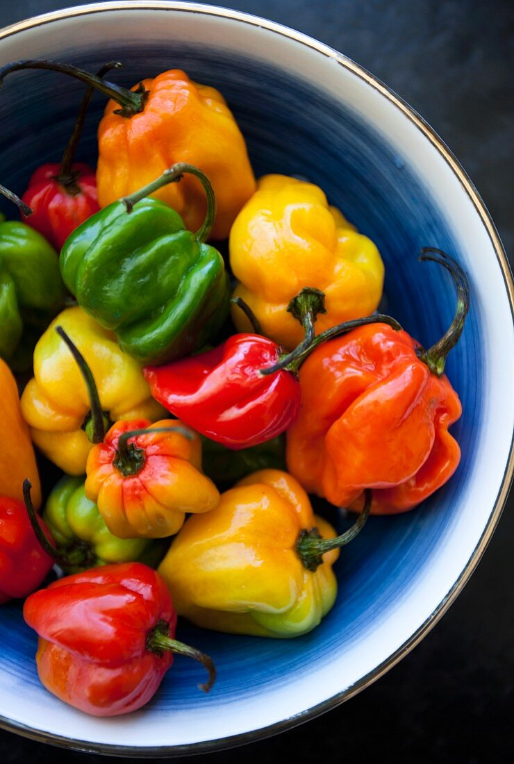 Various colours of chili peppers in a blue and white collander