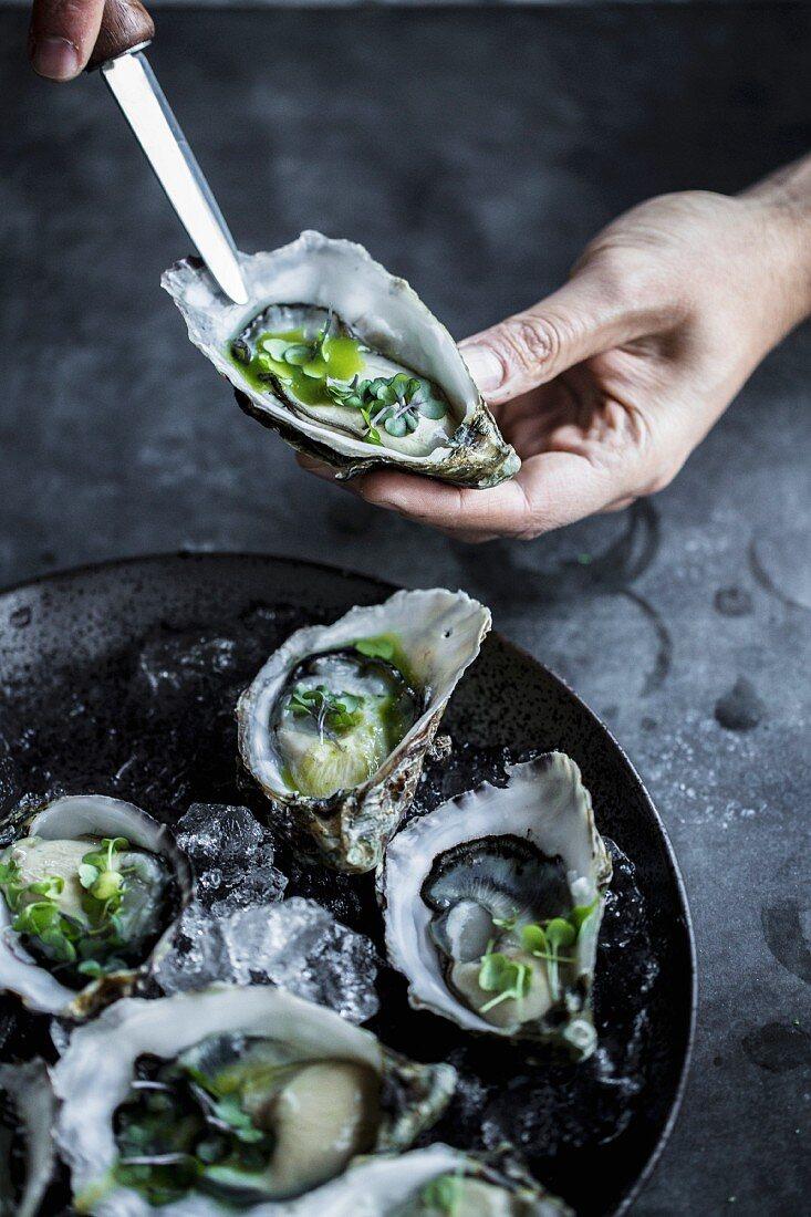 Frische Austern mit Kräutern