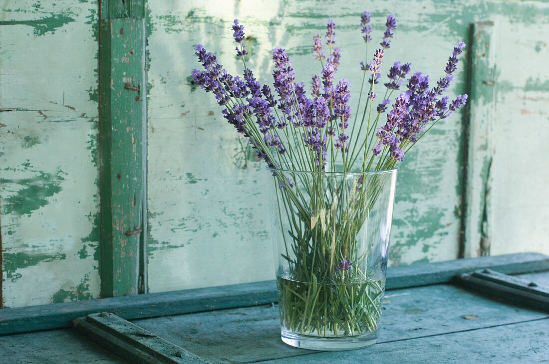 Bunch of lavender in a flower vase